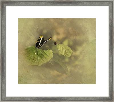 Hop On My Back My Lady And We Will Fly Far Far Away Framed Print
