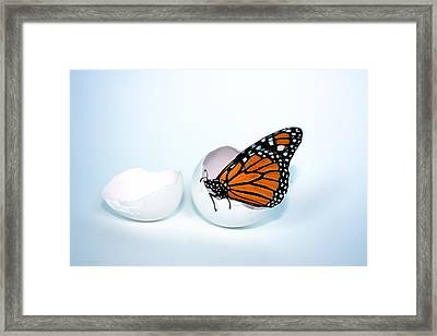 Hope Hatches Framed Print by Chrystyne Novack