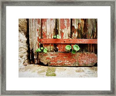 Hope Framed Print by Lainie Wrightson