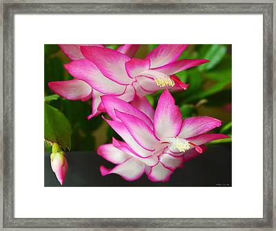 Hopeful For You Framed Print by Felicia Tica