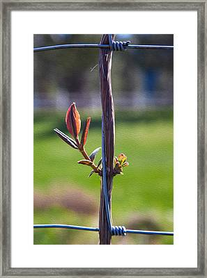 Hopeful Honeysuckle Framed Print by Omaste Witkowski
