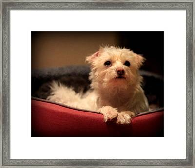 Hopeful Framed Print by Michael Curry