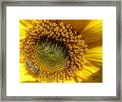 Hopeful - Signed Framed Print