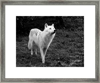 Framed Print featuring the photograph Hopeful by Vicki Spindler