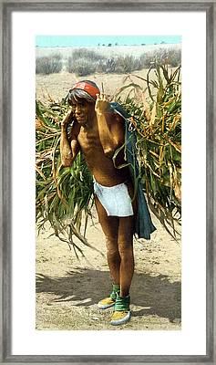 Hopi Corn Harvest, C1902 Framed Print by Granger