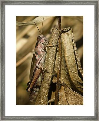 Hopper Framed Print by Jack Zulli