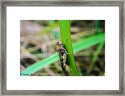 Hopping Along  Framed Print by Steven  Taylor