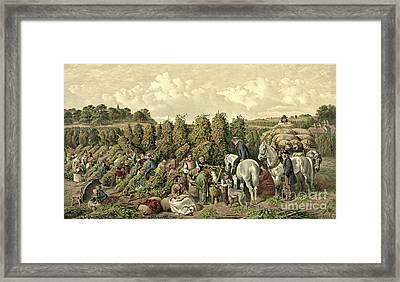 Hops Harvest 1857 Framed Print