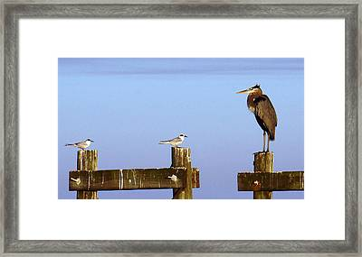 Horace Is Back Framed Print by Barry Goble