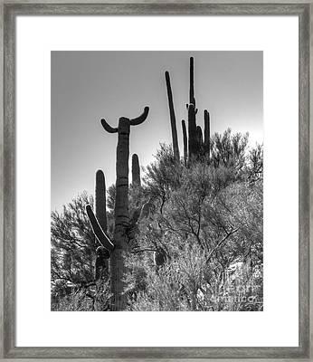 Horn Saguaro Cactus Framed Print