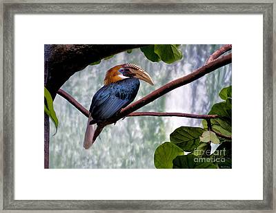 Framed Print featuring the photograph Hornbill In Paradise by Adam Olsen