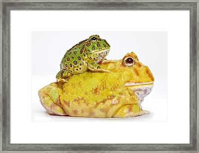 Horned Frogs Framed Print