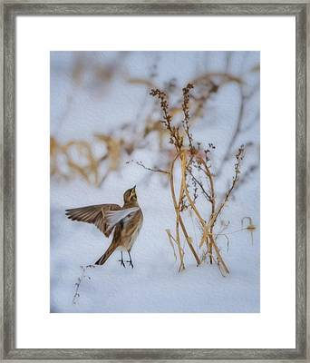 Horned Lark Take Off Framed Print