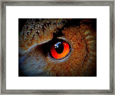 Horned Owl Eye Framed Print by David Mckinney