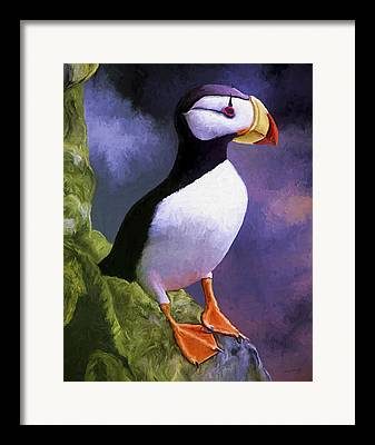 Puffin Paintings Framed Prints