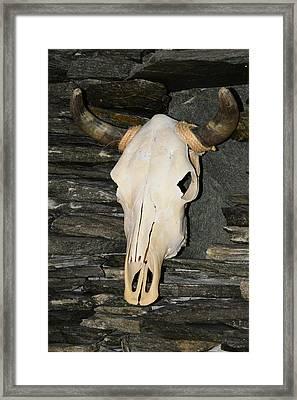 Horned Skull Framed Print by T C Brown