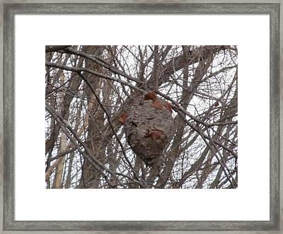 Hornets Nest East Framed Print by Tina M Wenger