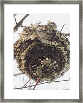 Hornet's Nest Framed Print by Todd Sherlock