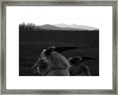 Horns And Hills Framed Print