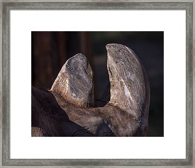 Horns Of The Rhino Framed Print by Ernie Echols