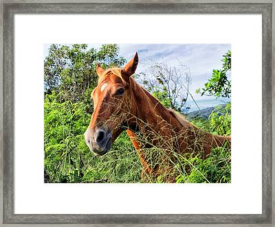 Framed Print featuring the photograph Horse 1 by Dawn Eshelman