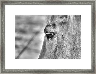 Horse 1 Framed Print by Jimmy Ostgard
