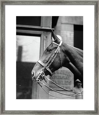 Horse, 1921 Framed Print by Granger