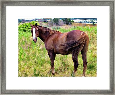Framed Print featuring the photograph Horse 5 by Dawn Eshelman