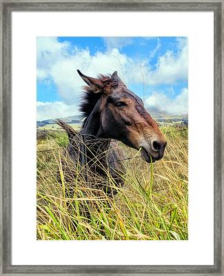 Framed Print featuring the photograph Horse 6 by Dawn Eshelman