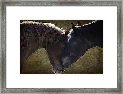 Horse Affection Framed Print by Jacque The Muse Photography