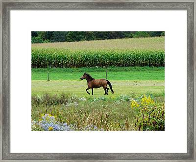 Horse Amidst Many Colors Framed Print by Sherry Brant