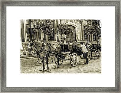 Horse And Buggy In Sevilla - Spain Framed Print by Madeline Ellis
