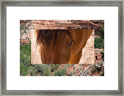 Horse And Canyon Framed Print