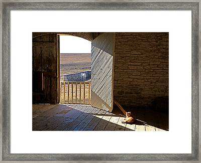 Horse And Cat Show Framed Print