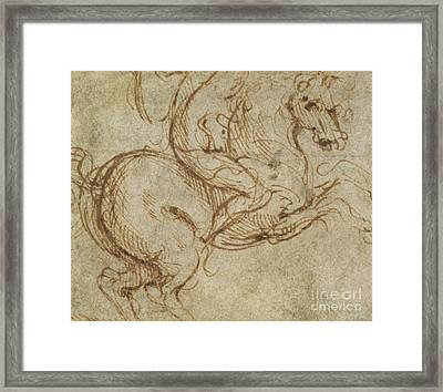Horse And Cavalier Framed Print by Leonardo da Vinci