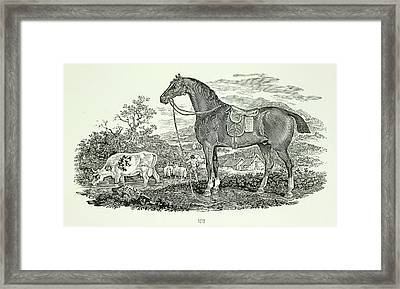 Horse And Cow Framed Print by British Library