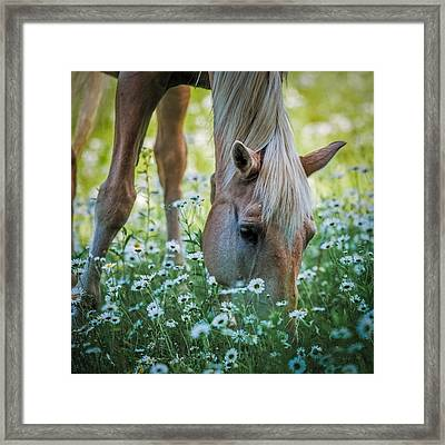 Horse And Daisies Framed Print