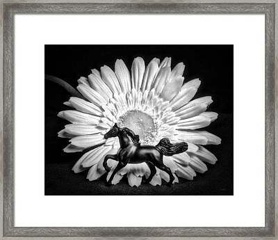 Horse And Daisy Framed Print