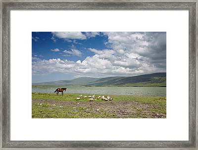 Horse And Geese By Lake Aktas Framed Print by Bob Gibbons