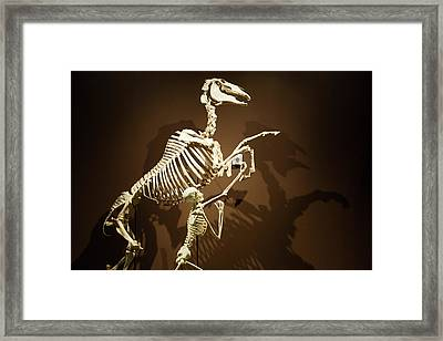 Horse And Human Skeletons Exhibit Framed Print