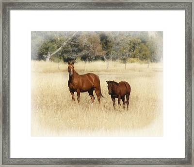 Horse And Pony 2 Framed Print
