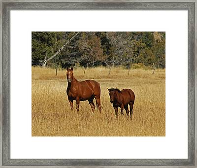 Horse And Pony Framed Print