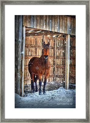 Horse And Snow Storm Framed Print