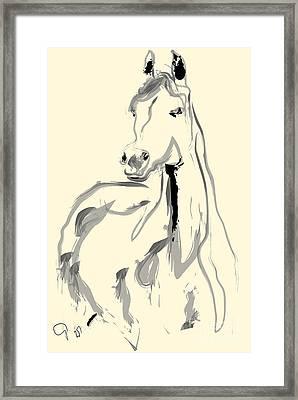 Horse - Arab Framed Print by Go Van Kampen