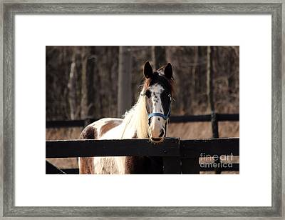 Horse At The Gate Framed Print