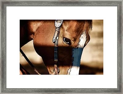 Horse At Work Framed Print by Pamela Blizzard