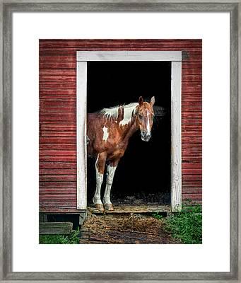 Horse - Barn Door Framed Print by Nikolyn McDonald