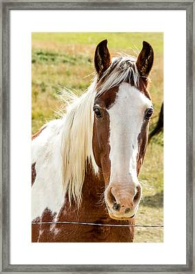 Horse Beauty Framed Print