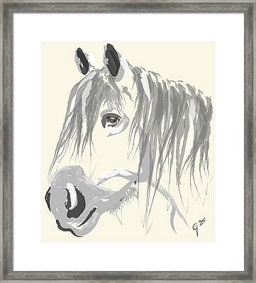 Horse- Big Jack Framed Print by Go Van Kampen
