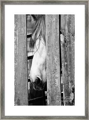 Horse Board 3 Framed Print by Lynda Dawson-Youngclaus
